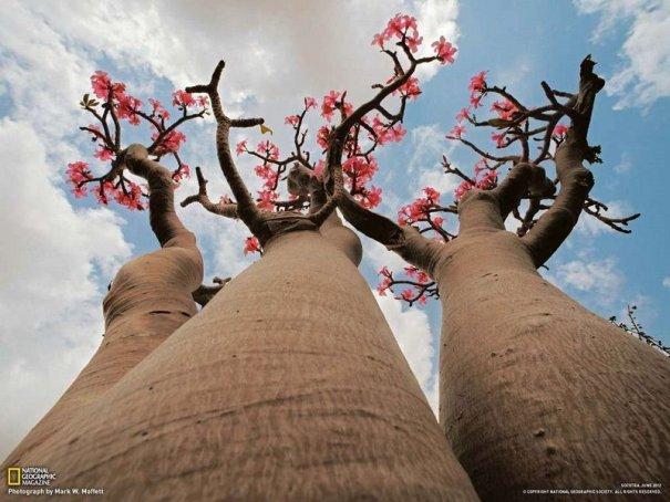 Удивительно красивые фото острова Сокотра - №15