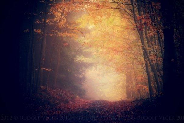 Необычная осень в красивых фото - №3