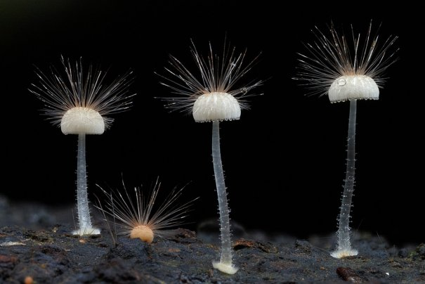 Таинственный мир грибов в красивых фото работах - №2