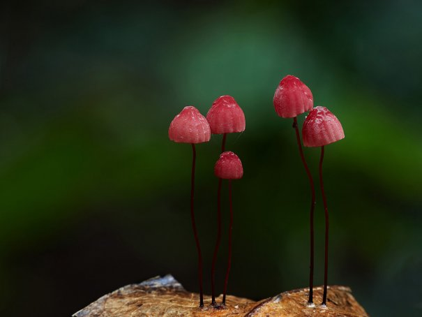 Таинственный мир грибов в красивых фото работах - №10