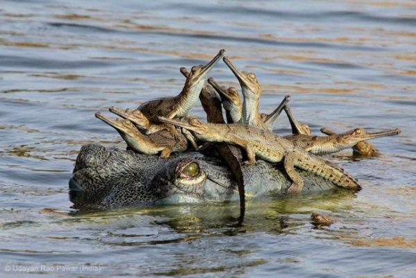 Новости в фотографиях - Победители фотоконкурса Wildlife Photographer 2013 - №2