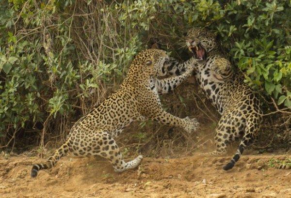 Новости в фотографиях - Победители фотоконкурса Wildlife Photographer 2013 - №3