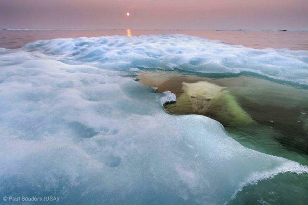 Новости в фотографиях - Победители фотоконкурса Wildlife Photographer 2013 - №4