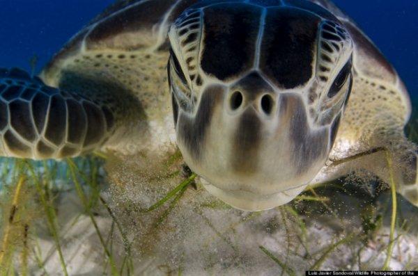 Новости в фотографиях - Победители фотоконкурса Wildlife Photographer 2013 - №6