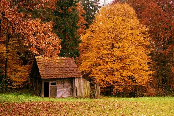 Самые красивые фото домов в лесу - №1