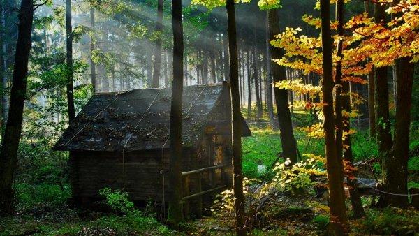 Самые красивые фото домов в лесу - №2