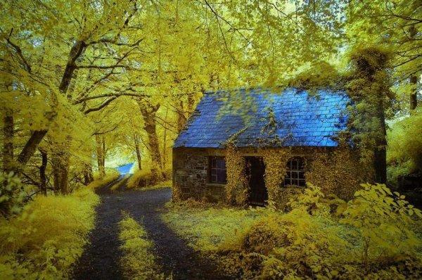 Самые красивые фото домов в лесу - №6