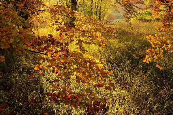 Christopher Page – Autumn Colour at Polesden Lacey