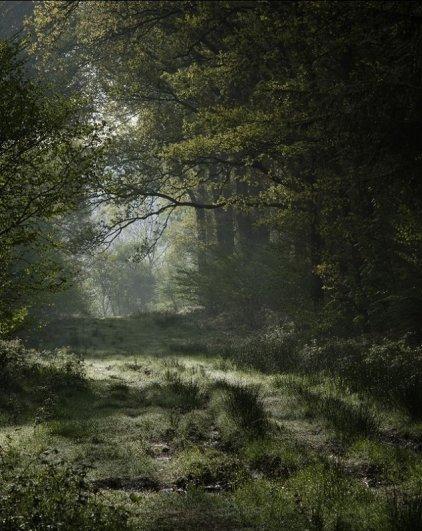 Paul Mitchell - Micheldever Woods