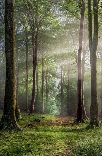 Robert Wolstenholme  - Buckholt Wood