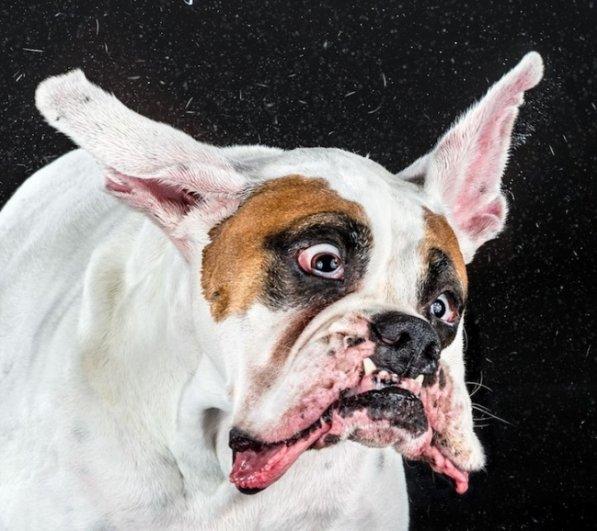 Забавные псы в блоге фото юмора - №2