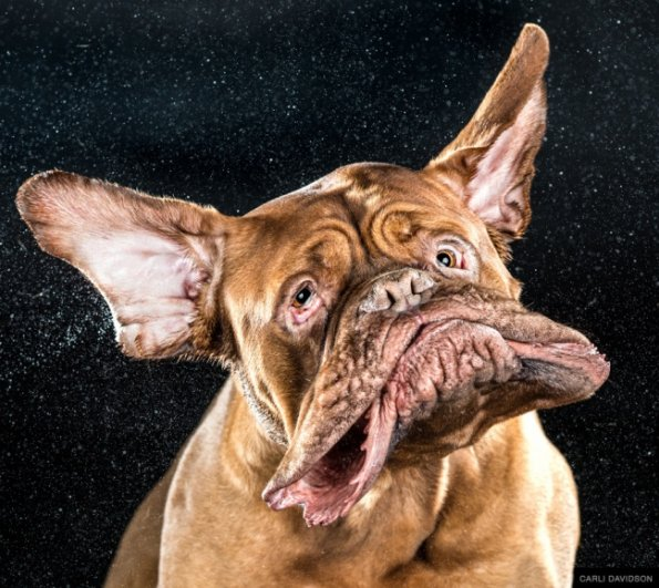 Забавные псы в блоге фото юмора - №4