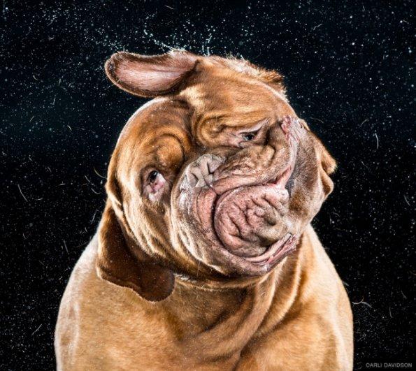 Забавные псы в блоге фото юмора - №5