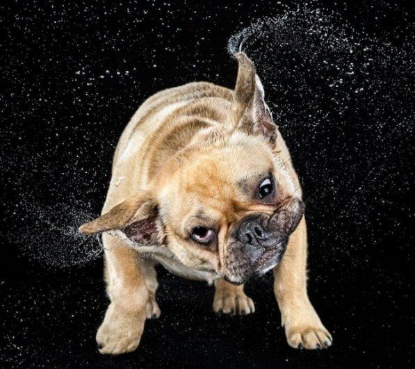 Забавные псы в блоге фото юмора - №10