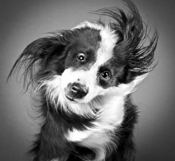 Забавные псы в блоге фото юмора - №16