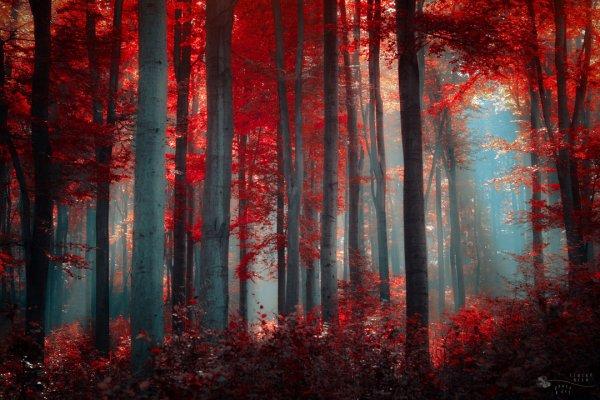 Таинственный лес в красивых фото - №1