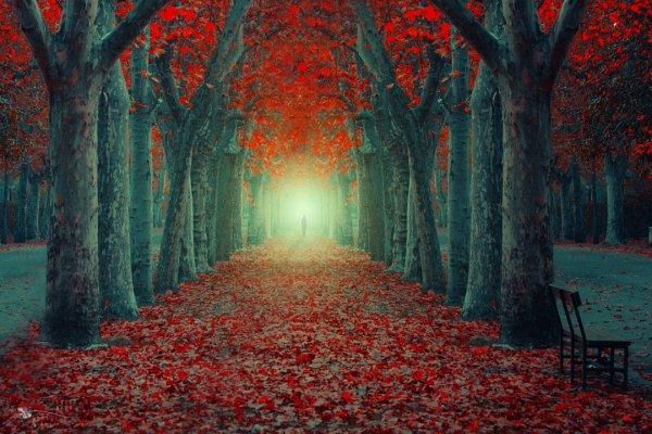 Таинственный лес в красивых фото - №2