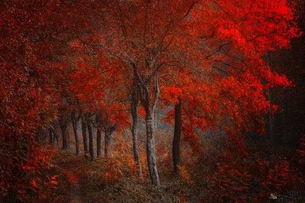 Таинственный лес в красивых фото - №3