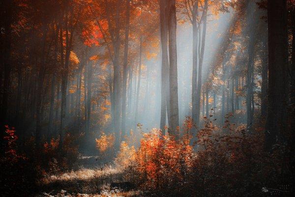 Таинственный лес в красивых фото - №4