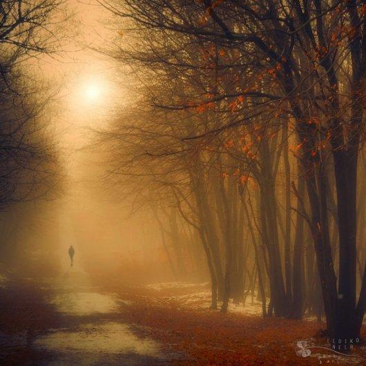 Таинственный лес в красивых фото - №5