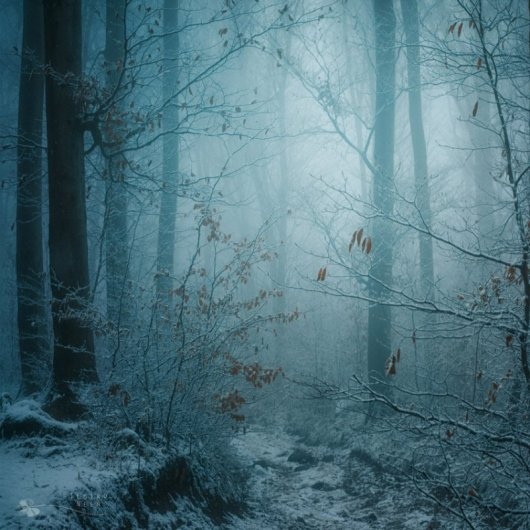 Таинственный лес в красивых фото - №6