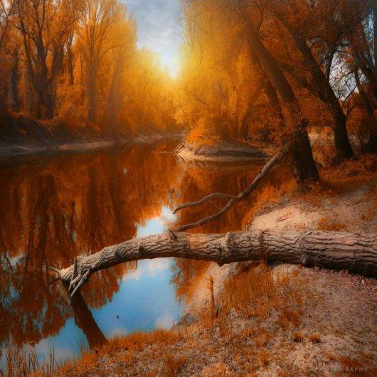 Таинственный лес в красивых фото - №7