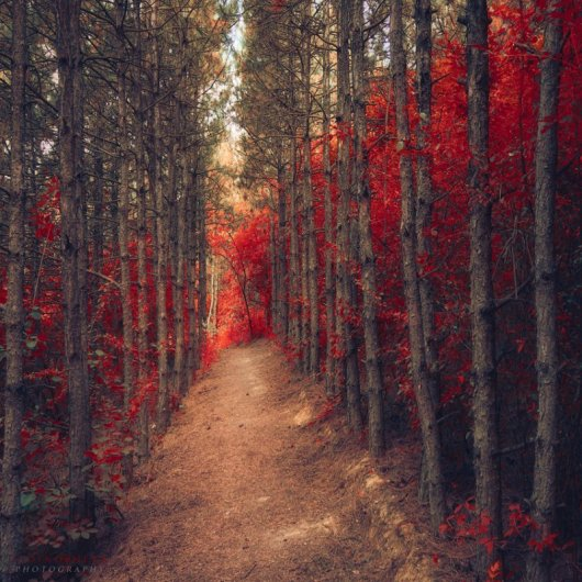 Таинственный лес в красивых фото - №8