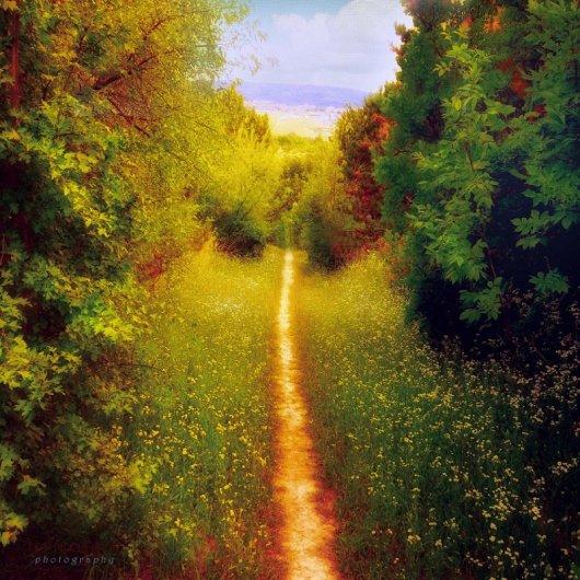 Таинственный лес в красивых фото - №9
