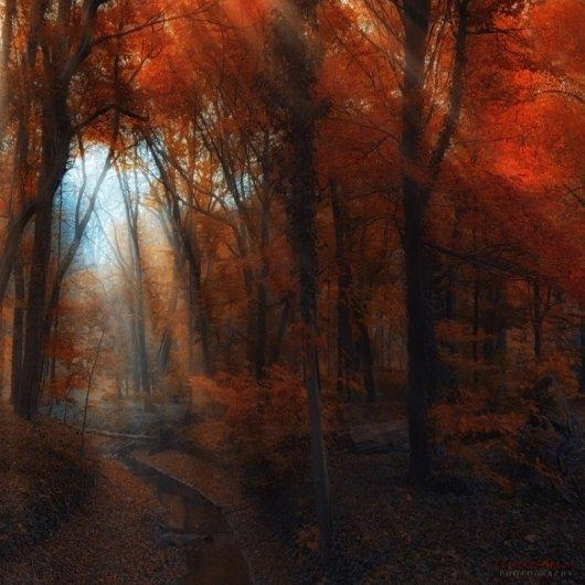 Таинственный лес в красивых фото - №10