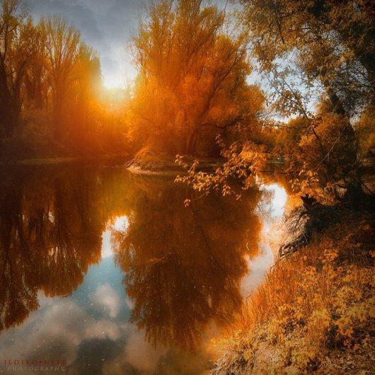Таинственный лес в красивых фото - №11