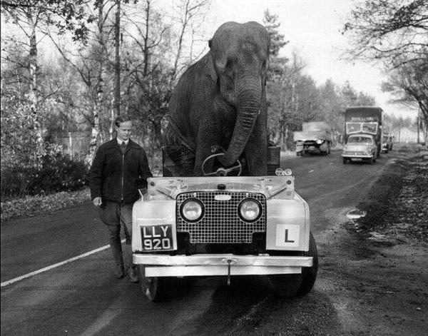 Поездка с животными 20