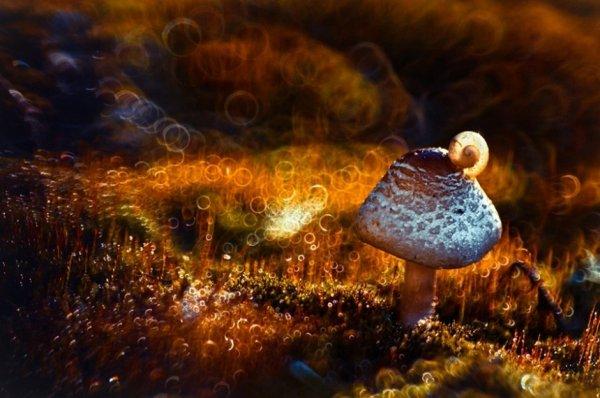 Волшебная макро фото съемка Магдалены Васичек - №12