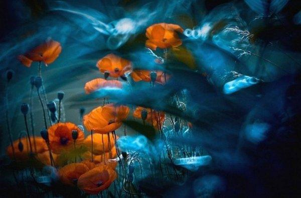 Волшебная макро фото съемка Магдалены Васичек - №17