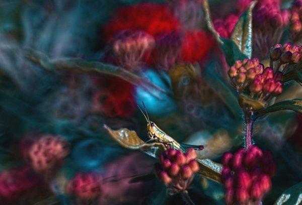 Волшебная макро фото съемка Магдалены Васичек - №18