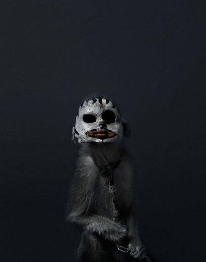 Макаки в масках – жуткие, но интересные фото - №2