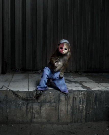 Макаки в масках – жуткие, но интересные фото - №4