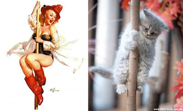 Фото юмор про кошек и девушек пин-ап! - №10