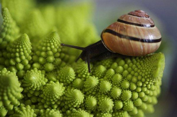 Новости в фотографиях - National Geographic Photo Contest 2013 - №2