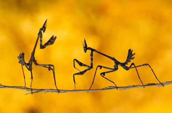 Новости в фотографиях - National Geographic Photo Contest 2013 - №7