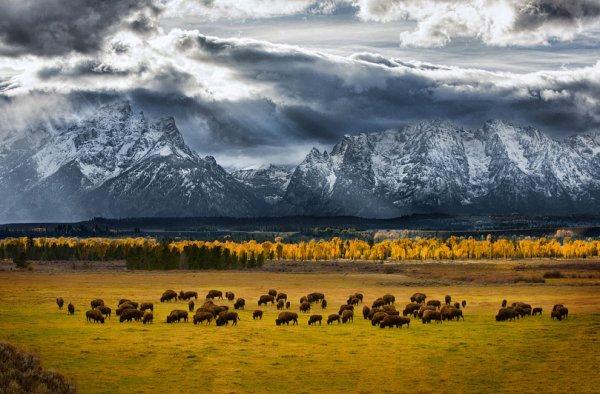 Новости в фотографиях - National Geographic Photo Contest 2013 - №11