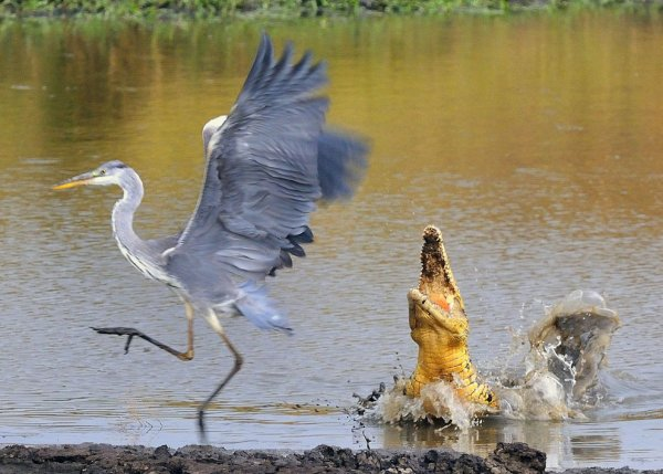 Новости в фотографиях - National Geographic Photo Contest 2013 - №16