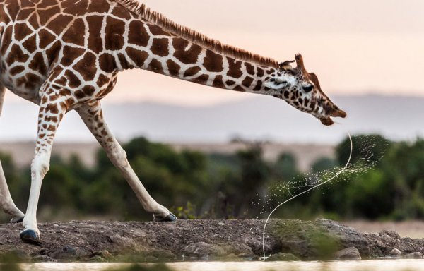 Новости в фотографиях - National Geographic Photo Contest 2013 - №28