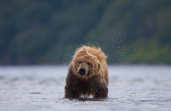 Новости в фотографиях - National Geographic Photo Contest 2013 - №30