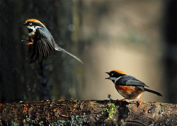 Фото съемка птиц. Лучший момент в кадре - №1