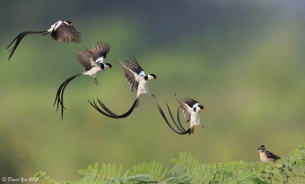 Фото съемка птиц. Лучший момент в кадре - №5
