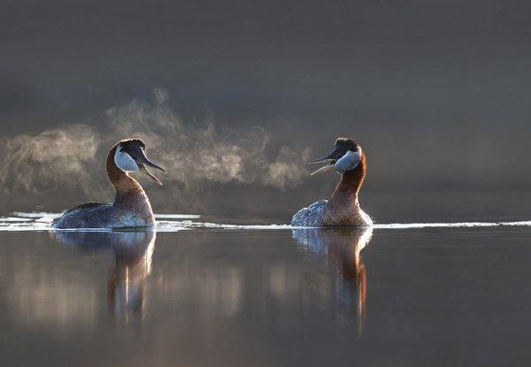 Фото съемка птиц. Лучший момент в кадре - №29
