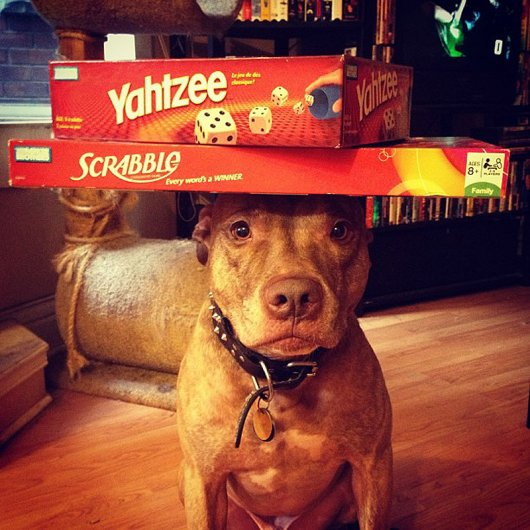 Скаут – самая спокойная в мире собака в блоге Фото юмора - №3