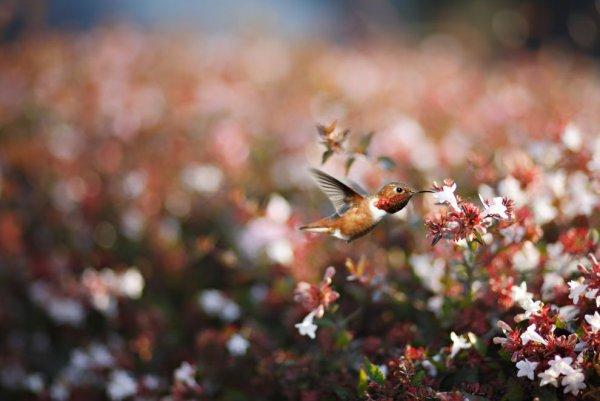 Новости в фотографиях - самые красочные уголки нашей планеты - №5