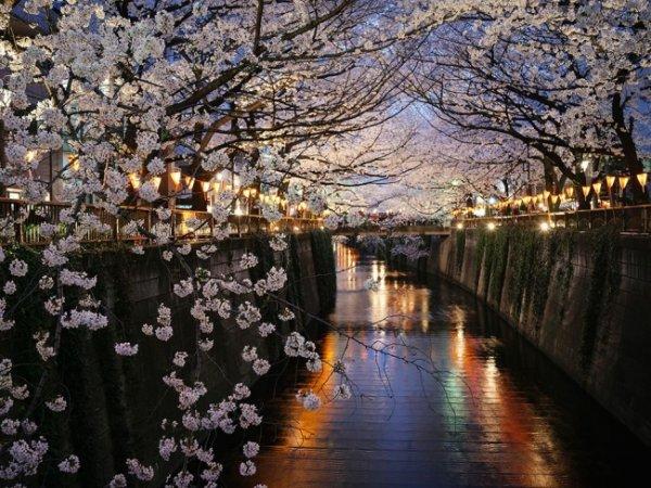 Удивительные и красивые фото кадры природы - №6