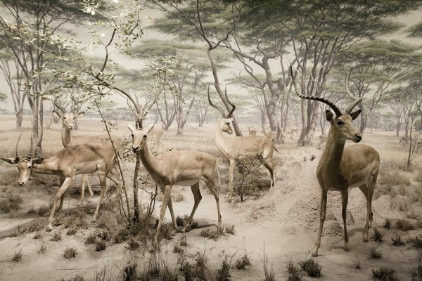Лео Кейллард. Ретушь и монтаж фото кадров дикой природы - №12